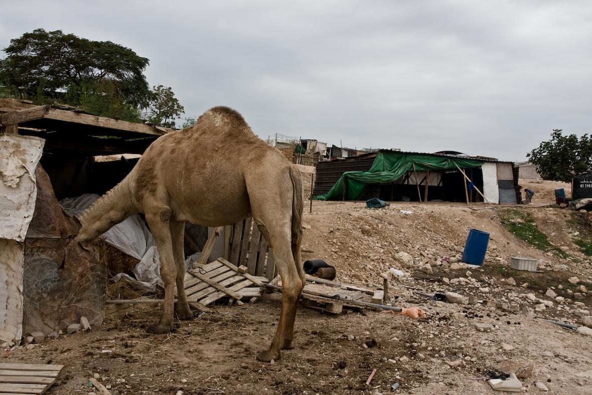 beduinschool-6798