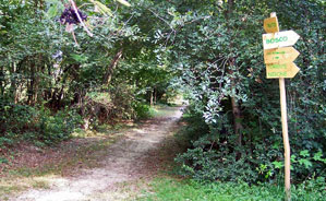 Trail al parco delle Groane